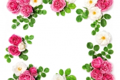 White pink rose flowers Floral Holidays background